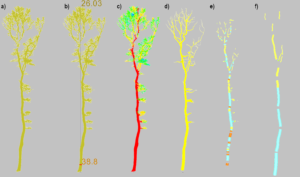 workflow of tree segmentation and parameter estimation