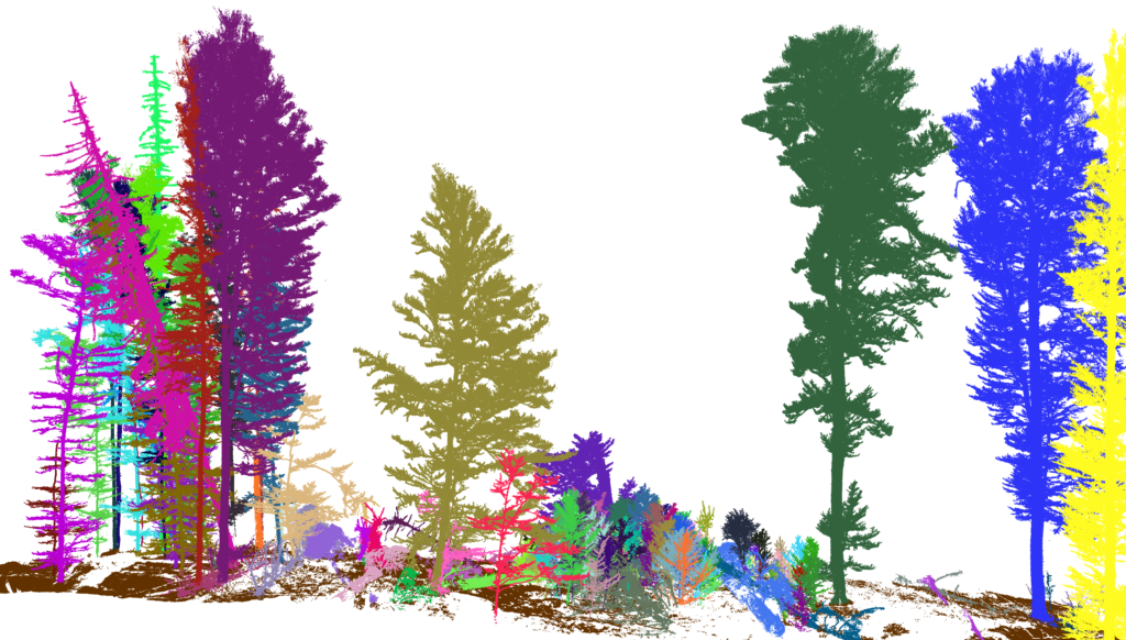 3D Forest - Terrestrial lidar data processing tool